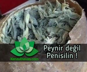 Kanuni Sultan Süleyman – Küflü Peynir